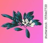 exotic flowers set. botanical... | Shutterstock .eps vector #555667720