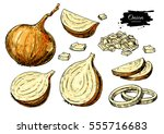 onion hand drawn vector set.... | Shutterstock .eps vector #555716683