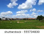 landscape with typical dutch... | Shutterstock . vector #555734830