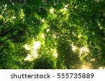beautiful nature backdrop image ... | Shutterstock . vector #555735889