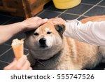 Cute Japanese Akita Dog Looking ...