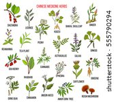 chinese medicinal herbs. hand... | Shutterstock .eps vector #555790294