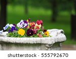 Flowered Bed With Pansy Flowers