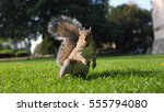 A Squirrel Eats Walnut
