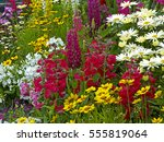 a colourful flower border with... | Shutterstock . vector #555819064