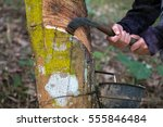 Small photo of Gide hands of farmers are beginning tires with rubber cups for water timber.