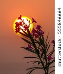 Small photo of Flowers bidding adieu to the setting Sun