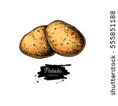potato vector drawing. isolated ... | Shutterstock .eps vector #555851188