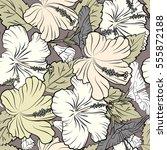 multicolored hibiscus flowers... | Shutterstock .eps vector #555872188