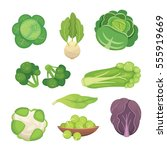 set vector cabbage and lettuce. ... | Shutterstock .eps vector #555919669