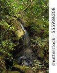 phukradung national park... | Shutterstock . vector #555936208