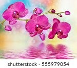 colorful bright orchid flowers... | Shutterstock . vector #555979054