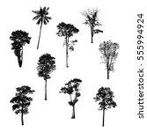 black tree silhouettes on white ... | Shutterstock . vector #555994924