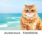 Cute Cat On Seashore Background