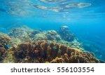 seashore scenery with coral... | Shutterstock . vector #556103554