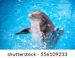 dolphin | Shutterstock . vector #556109233