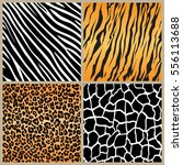 set safari jungle animal fur... | Shutterstock .eps vector #556113688