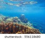 underwater scenery with coral... | Shutterstock . vector #556118680