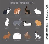 Stock vector rabbit lapin breed icon set flat design vector illustration 556120726