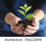 senior man holding young tree... | Shutterstock . vector #556122898