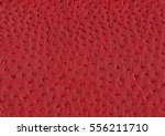 full frame abstract red ostrich ... | Shutterstock . vector #556211710