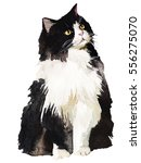 Stock photo tuxedo black and white fat fluffy cat watercolor painting isolated 556275070