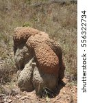 termite mounds  | Shutterstock . vector #556322734