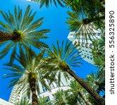 fisheye view of beautiful miami ...   Shutterstock . vector #556325890