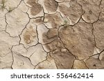 dry land  detail of drought ... | Shutterstock . vector #556462414