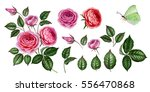 pink and red rose set.... | Shutterstock . vector #556470868