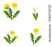 Vector Illustration Dandelions...