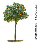 Small photo of Orange tree on white background