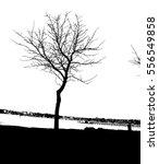 realistic tree silhouette ... | Shutterstock .eps vector #556549858