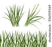 green grass  horizontal... | Shutterstock .eps vector #556559569
