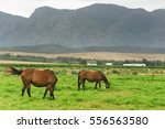 Horses In The Green Foothills...