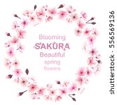 spring wreath with cherry... | Shutterstock .eps vector #556569136