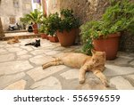 Three Cats Living In The...