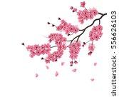 japanese sakura. lush the... | Shutterstock .eps vector #556626103