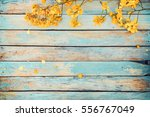 yellow flowers on vintage... | Shutterstock . vector #556767049