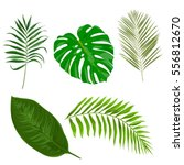 vector set with tropical exotic ... | Shutterstock .eps vector #556812670