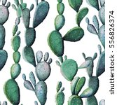 watercolor cactus tropical... | Shutterstock . vector #556826374