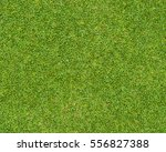 beautiful green grass pattern... | Shutterstock . vector #556827388