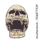 anatomic grunge skull vector... | Shutterstock .eps vector #556877539