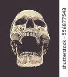 anatomic grunge skull vector... | Shutterstock .eps vector #556877548