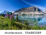 bow lake near icefields parkway ... | Shutterstock . vector #556883389