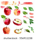 watercolor set with apples ... | Shutterstock . vector #556911238