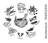 set of hand drawn vector spices ... | Shutterstock .eps vector #556922353