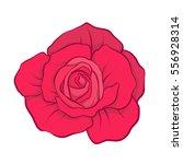 red rose flower isolated hand... | Shutterstock .eps vector #556928314