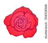red rose flower isolated hand... | Shutterstock .eps vector #556928368