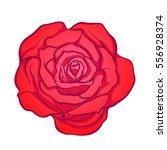 red rose flower isolated hand... | Shutterstock .eps vector #556928374